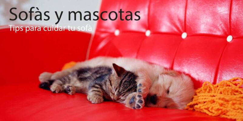 como cuidar sofa con mascota (perro / gato) livingstore santiago enseña