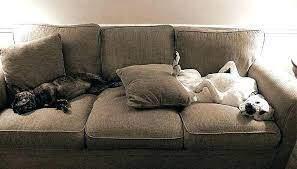perros en el sofa