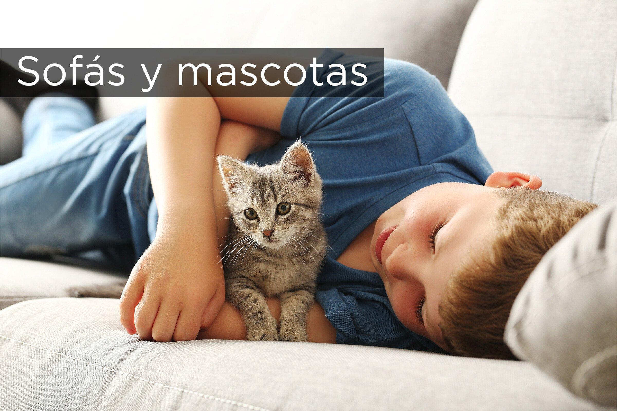 Sofas Y Mascotas