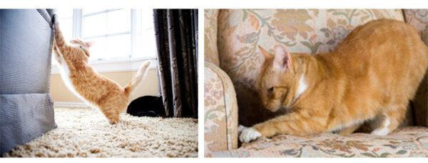 Gato Arana Sofa